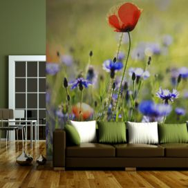 Bimago Fototapeta - A meadow with a poppy among bluets 200x154 cm GLIX DECO s.r.o.