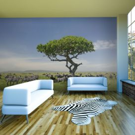 Bimago Fototapeta - Africa - zebras in the shade of a tree 200x154 cm GLIX DECO s.r.o.