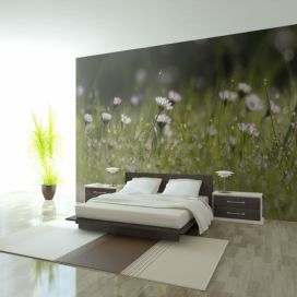 Bimago Fototapeta - Daisies with morning dew 200x154 cm