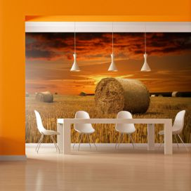 Bimago Fototapeta - Fields of gold 200x154 cm GLIX DECO s.r.o.
