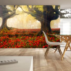 Fototapeta Bimago - Morning among poppies + lepidlo zdarma 350x245 cm