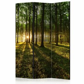 Paraván - Morning in the Forest [Room Dividers] - 135x172 4wall.cz