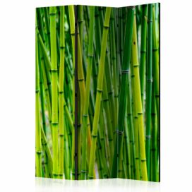 Paraván - Bamboo Forest [Room Dividers] - 135x172