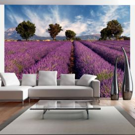 Fototapeta - Lavender field in Provence, France - 400x309 4wall.cz