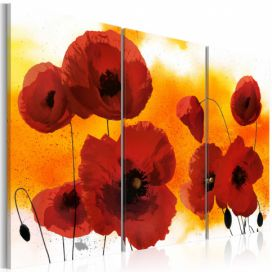 Obraz - Sunny afternoon and poppies - 120x80 4wall.cz