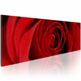 Obraz - Midnight rose - 120x40 4wall.cz
