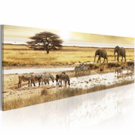 Obraz - Africa: at the waterhole - 135x45 4wall.cz