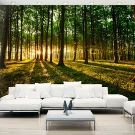 Bimago Fototapeta - Mystical Morning 200x140 cm