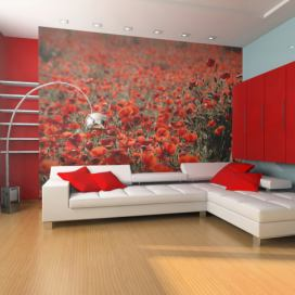 Bimago Fototapeta - A meadow of poppies and wild flowers 250x193 cm