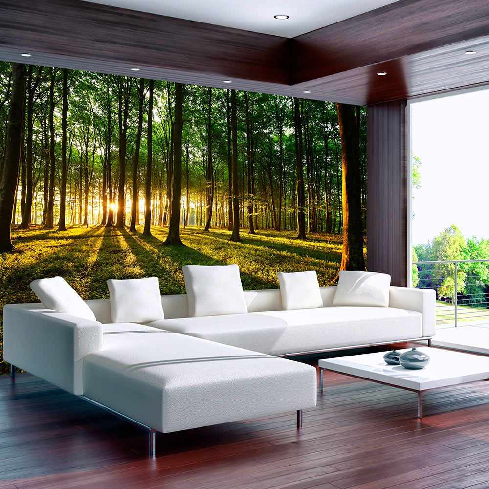 Bimago Fototapeta - Spring: Morning in the Forest 350x245 cm - GLIX DECO s.r.o.
