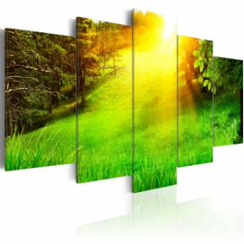 Obraz - Forest and sun - 100x50 4wall.cz