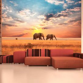 Fototapeta - African savanna elephants - 250x193