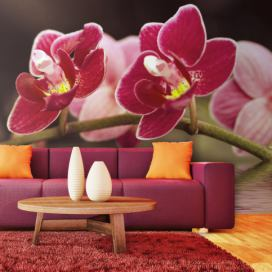 Fototapeta - Beautiful orchid flowers on the water - 250x193