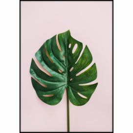 Plakát Imagioo Monstera Leaf, 40 x 30 cm